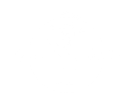 Alicia D'Elia Photography